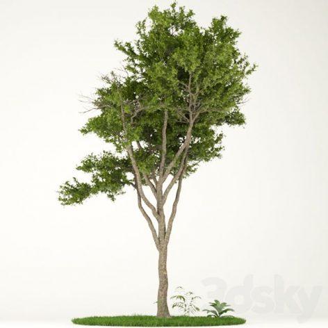 آبجکت آماده درخت 1