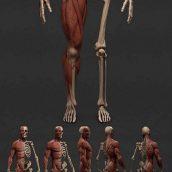 آبجکت آناتومی بدن