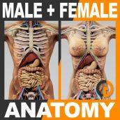 مدل سه بعدی آناتومی انسان