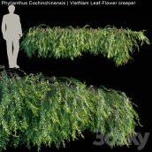 مدل سه بعدی گیاه دیواری