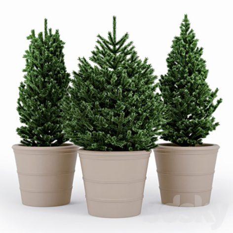 مدل سه بعدی درخت صنوبر