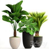 مدل سه بعدی کالکشن گیاه 116