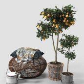 مدل سه بعدی درخت خانگی