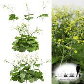 مدل سه بعدی گیاه 2