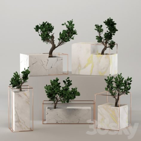 مدل سه بعدی باکس گل