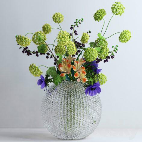 Viburnum Anemones
