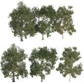 مدل سه بعدی مجموعه درخت