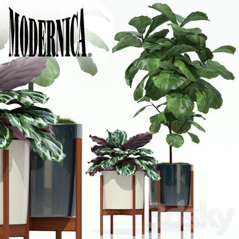 آبجکت گیاه