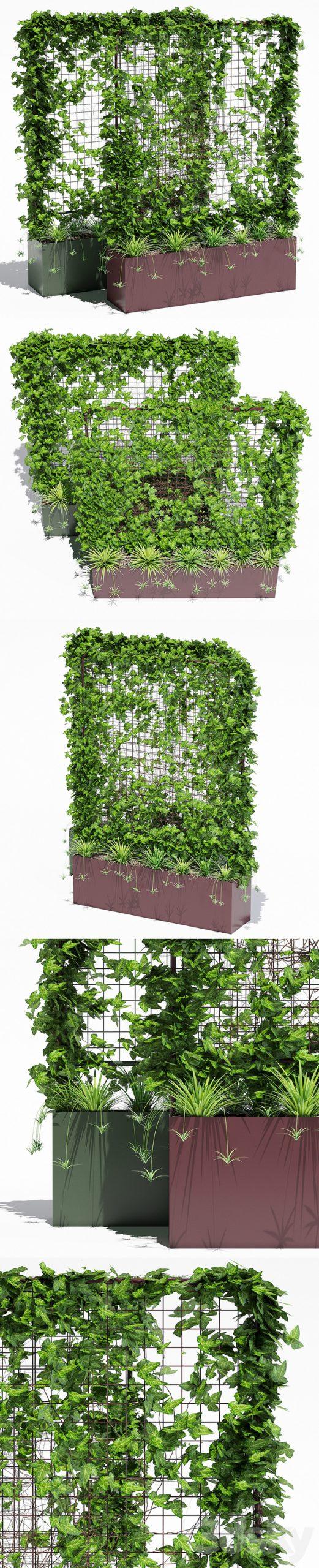 مدل سه بعدی گیاه بالا رونده