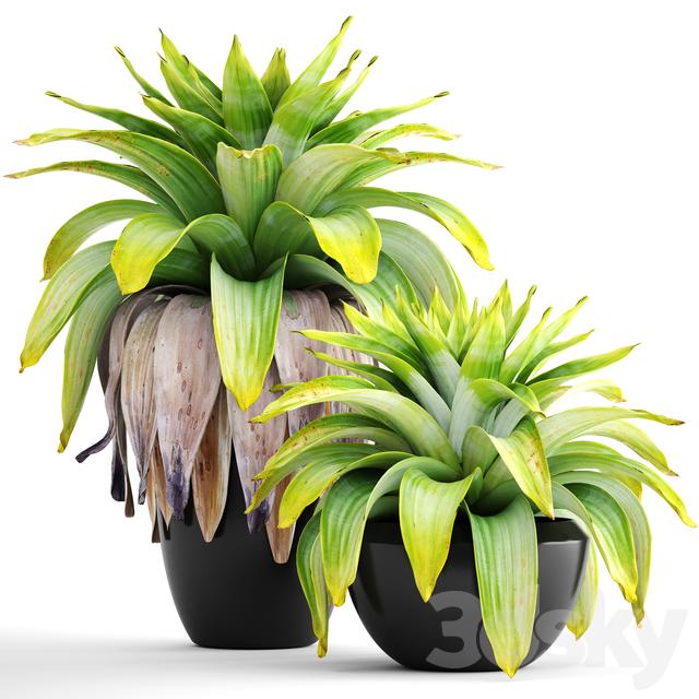 مدل سه بعدی مجموعه گیاه 144