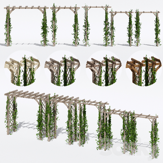 مدل سه بعدی گیاه
