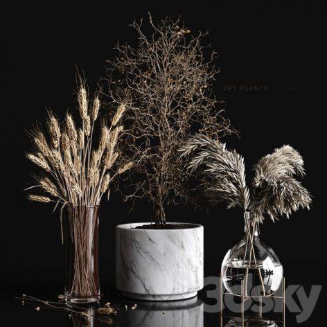 مدل سه بعدی گیاه سری پنجم