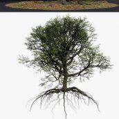 دانلود مدل سه بعدی درخت سری اول