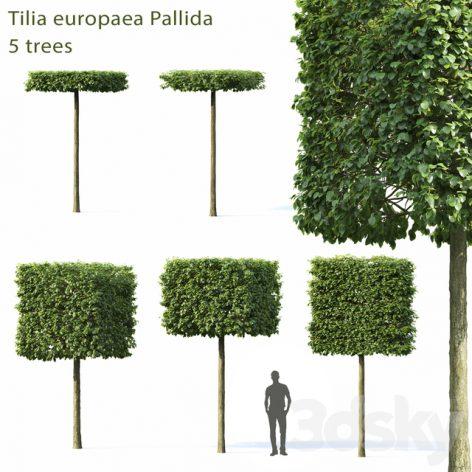 دانلود مدل سه بعدی مجموعه درخت ولوم اول
