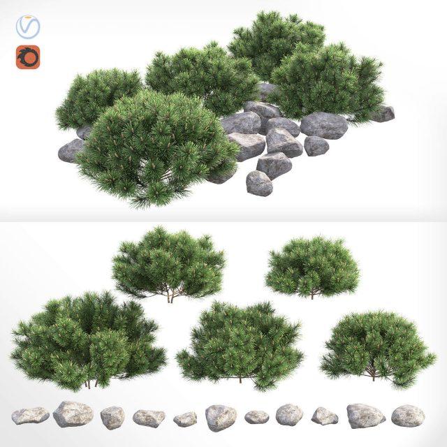 دانلود مدل سه بعدی بوته کوهی