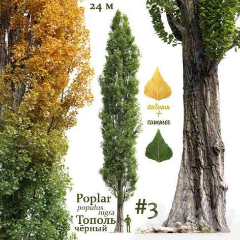دانلود آبجکت درخت سری چهارم